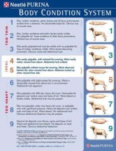 Purina provides these charts for veterinarians to use to teach clients!