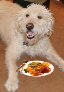 What NOT to give your dog on Thanksgiving!