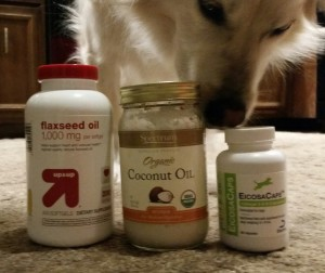 Does Cat Food Harm Dogs