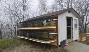 puppy mill outside