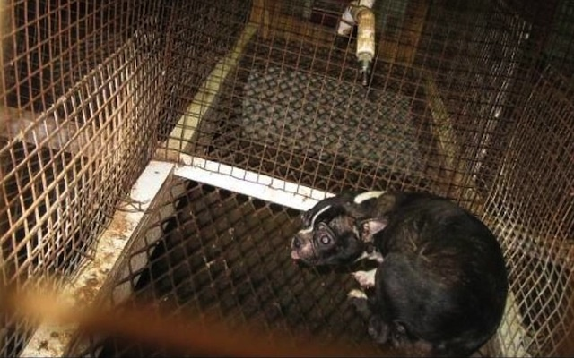 scare puppy mill dog