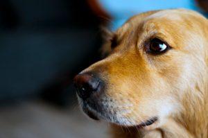 how to make dog vomit