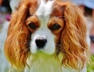 My Dogcat Has A Heart Murmur Now What Vetchickcom