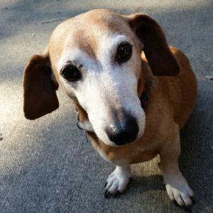 dog, liver, veterinary
