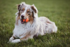 Aussie with ball