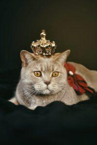 cat corona